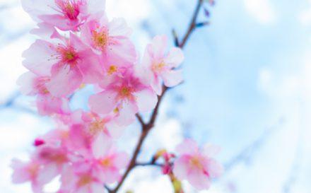 入学式・入社式 春